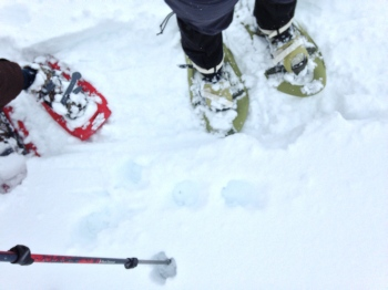 Snowshoes!