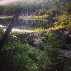 Sweet beaver dam before Tillotson Camp
