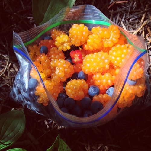 Foraging: Huckleberry and salmonberry spoils