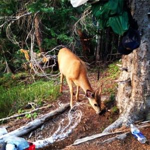 Deer in camp!